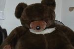 Bear600